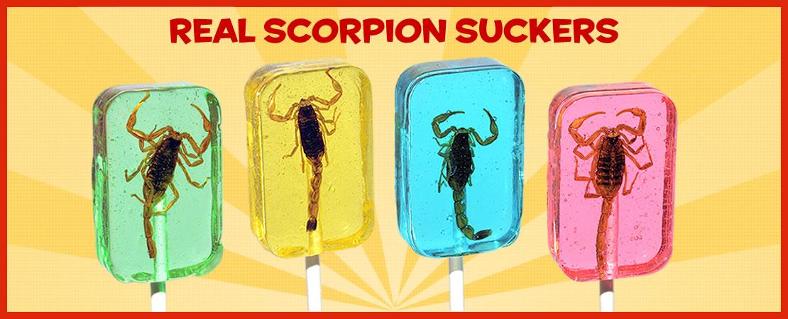 Real scorpion suckers
